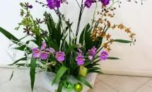 Composizione di orchidee