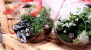 Sfera di vetro con piante