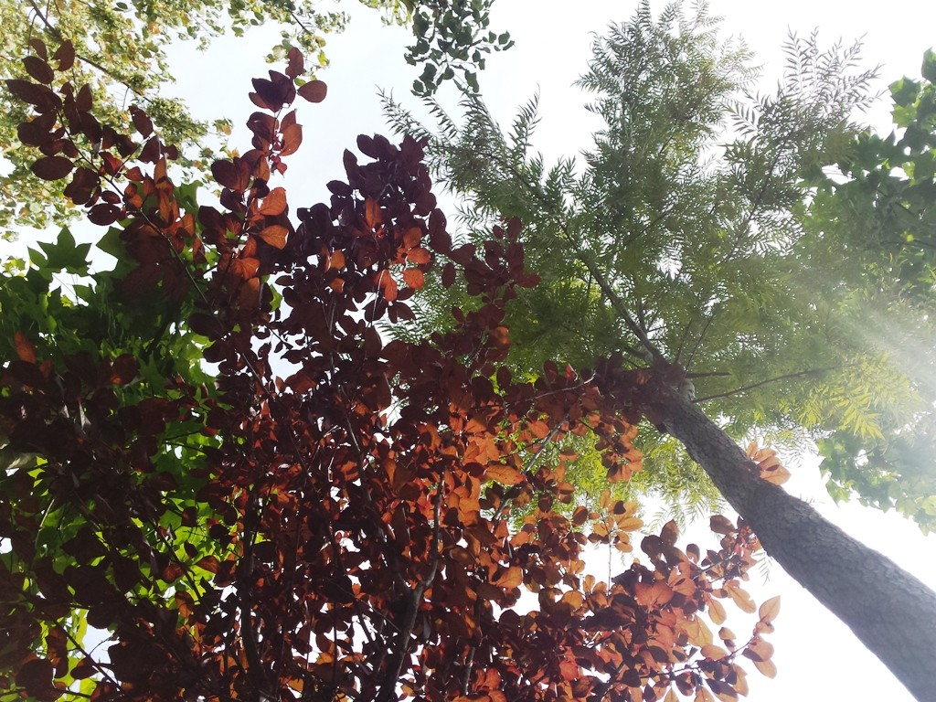 Vivaio v i p garden for Vivaio alberi