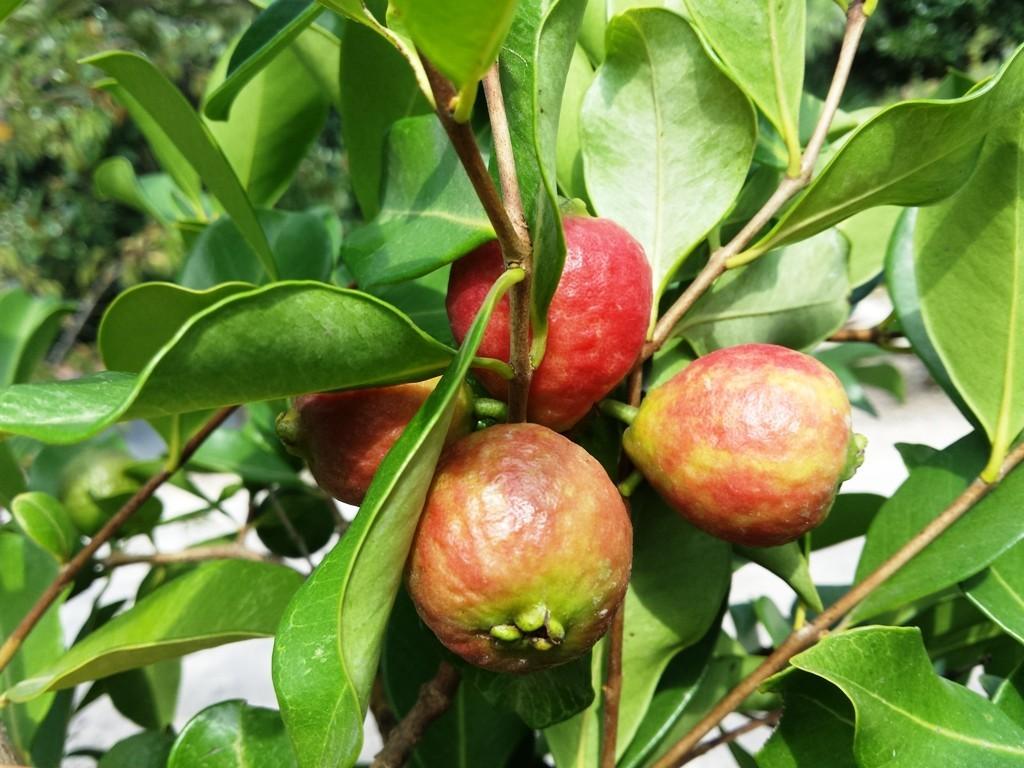 alberi ornamentali e piante da frutto v i p garden