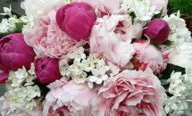 Bouquet Paeonia e bouvardia