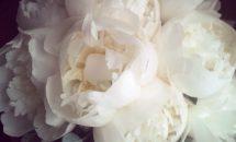 Bouquet Paeonie