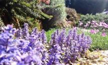 Fioritura di un giardino roccioso