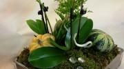 Composizione di Phalaenopsis