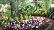 Mostra permanente delle orchidee