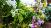 Serra delle orchidee
