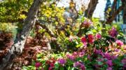 Particolare di Azalea in fiore