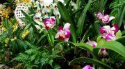 Orchidee in centro 2017